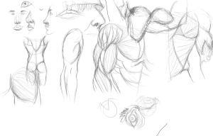 anatomy_sketches01